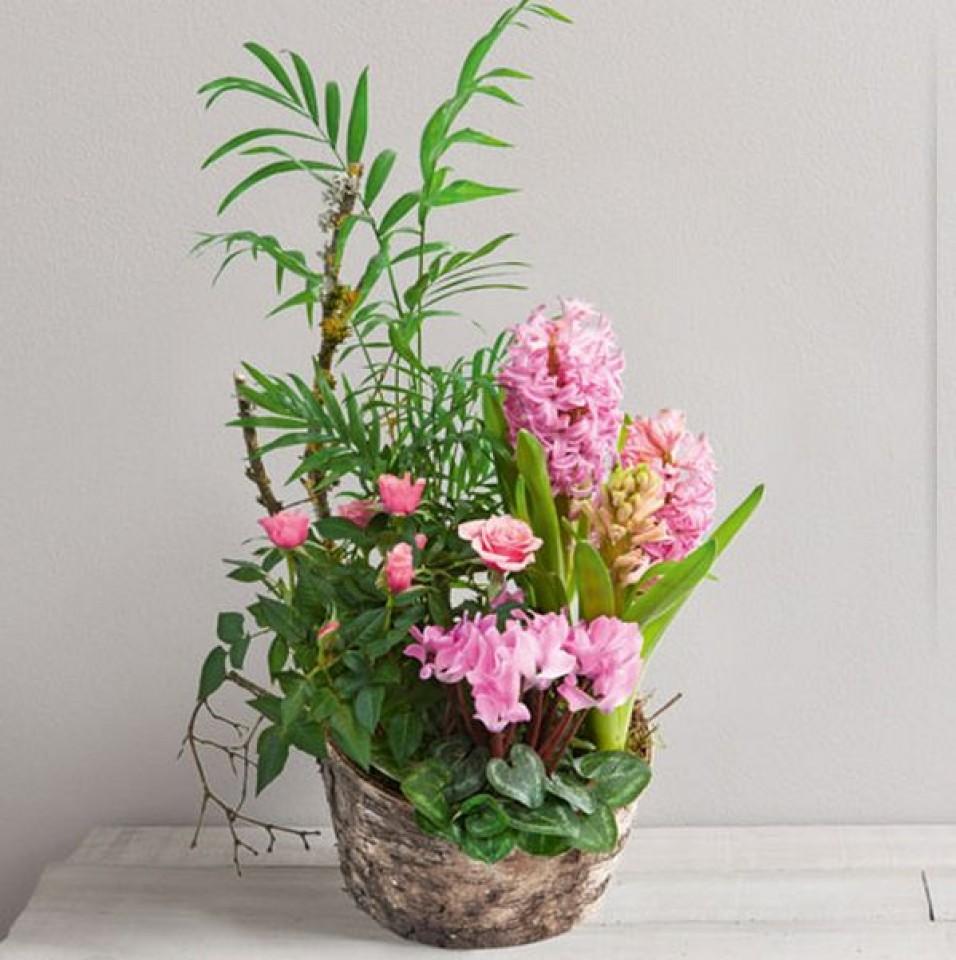 wikifleurs la passion des fleurs. Black Bedroom Furniture Sets. Home Design Ideas