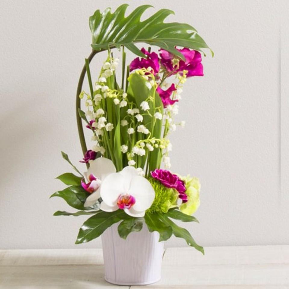 envoyer du muguet pour le 1er maiwikifleurs votre fleuriste en ligne wikifleurs le blog. Black Bedroom Furniture Sets. Home Design Ideas